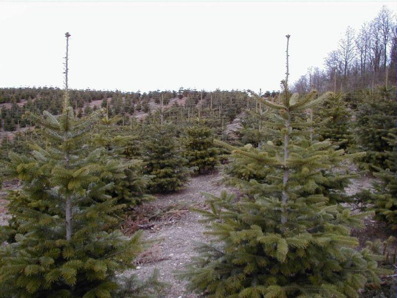 Skovbrug---1-1