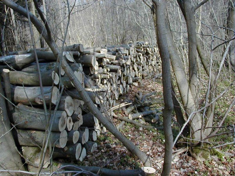Skovbrug---4