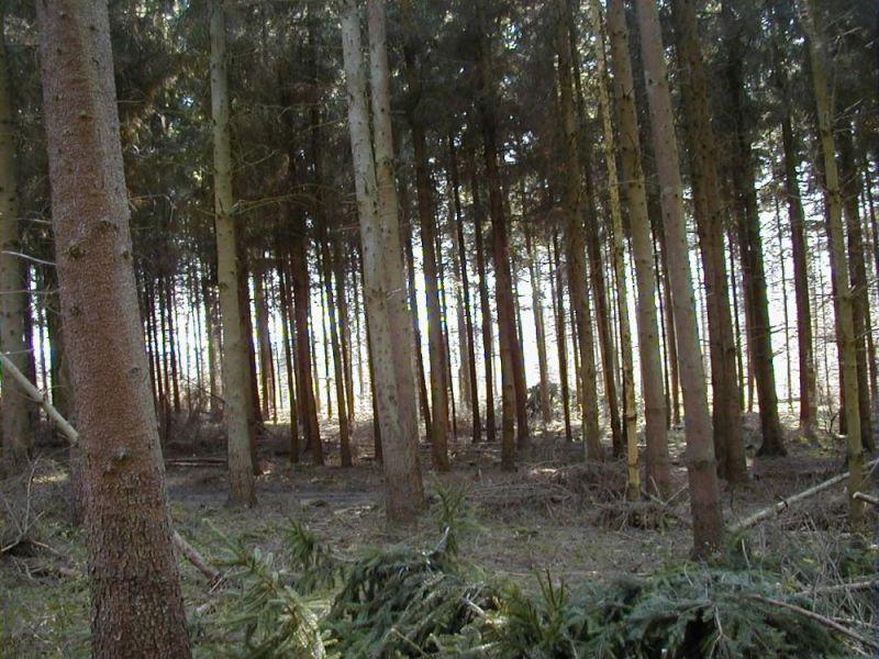 Skovbrug---5