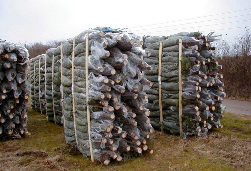 Skovbrug---8